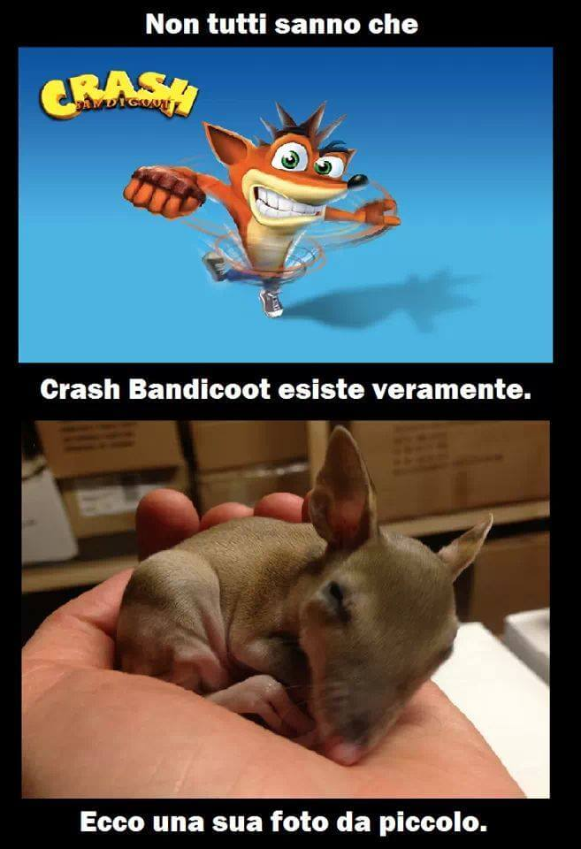 Crash bandicoot esiste