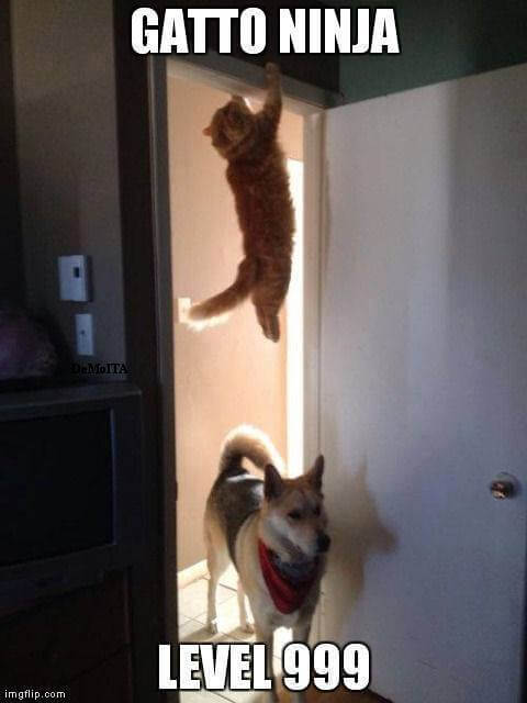 gatto-ninja-level-999